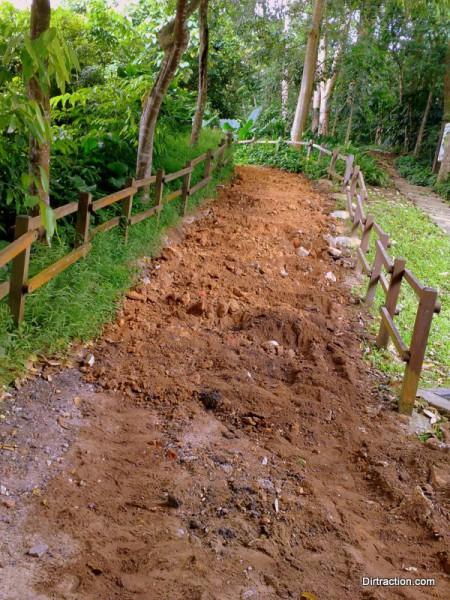 Bukit Timah Trail Head - healthy earth ready to breath again