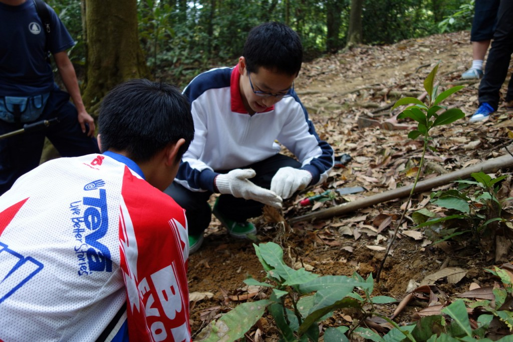 Young mountain bikers helped out with seedling. Planting and reforestation an important task during the trail day